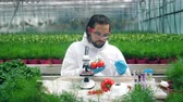 plant fertilizer : Vegetables are getting cultivated by a male scientist Stock Footage