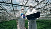 plant fertilizer : Glasshouse workers in safety wear are analyzing a plant