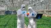 plant fertilizer : Two scientists are pumping vegetables with chemicals Stock Footage