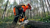 tala : Woodworker is using a chainsaw to cut the tree Archivo de Video