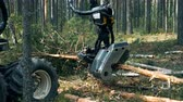 vrachtwagen : Wood-processing machine is sawing a felled pine