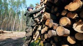 tala : Male worker is measuring felled timber