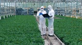 kertészet : Two botanists check plants in pots in a glasshouse. Chemist injecting pesticides.