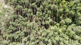 lumber industry : View from above of trees harvesting site Stock Footage