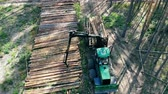tala : Harvesting vehicle is unloading processed pine trunks Archivo de Video