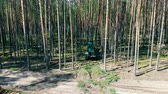調達 : Mechanical harvester is felling trees in a top view 動画素材