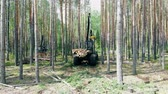 調達 : Industrial vehicle is processing felled trees in the forest 動画素材