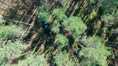tala : Top view of a pine forest getting harvested