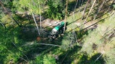lumber industry : Top view of the industrial vehicle chopping felled pines