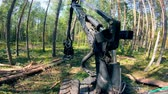 grijper : Working machine cuts trees in woods.