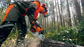 tala : Lumberjack is using a chainsaw to cut a pine. Deforestation, forest cutting concept.
