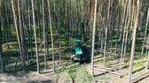 調達 : Deforestation, forest cut concept. Forest is getting cut by the harvesting vehicle