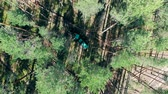 tala : Harvesting truck is cutting trees in a top view. Forest, tree logging, aerial view.