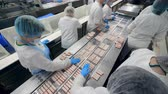 workforce : Industrial employees are processing fish products. Factory Workers Assembling products.