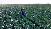 kök : Agrotechnician is inspecting a cabbage field