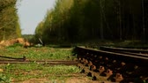 ferrugem : Abandoned railroad tracks in the forest