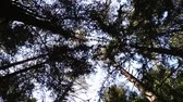 bosquet : The Crown of the trees. forest.