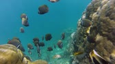 Bright life of the Coral reef