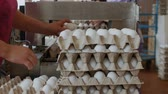 eggshells : Workers pack fresh hen eggs in the sorting chicken factory Stock Footage