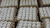 frágil : Eggs from chicken farm in the cardboard package that preserved for sale