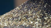 recycling facility : Production of rapeseed oil, processing of oilseed rapeseed, supply of rapeseed oil seeds to the cold pressing press, close-up