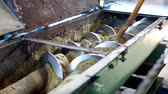 broušení : Production of rapeseed oil, processing of oilseed rapeseed, supply of rapeseed oil seeds to the cold pressing press, colza
