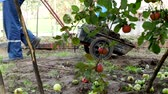 агрономия : A man carries a garden cart with manure for transportation around the garden, fertilizing the soil, country cottage area