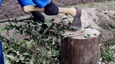 chop sticks : a man cuts branches with an ax, work at the dacha, close-up, cutting of branches, manual labor, steel