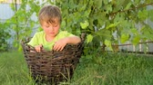 expressando : Human and nature. Boy in the basket. Happy childhood concept. Stock Footage