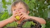 kolaylık : Matured apple in the hand of cute boy on green leaves background Stok Video