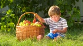amadurecida : Harvesting. Autumn in village. Grapes in basket. Boy eating grapes outdoor. Boy holding bunch of grapes. Stock Footage