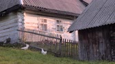 non kentsel : Non urban scene. Rural background. Old village houses on green grass background. Summer in the village. Back yard, front yard of household. Small business hens on back yard. Stok Video