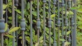 低木 : Automated gate system. Hedge background. Green fence or boundary formed by closely growing bushes or shrubs. Closing gates with green leaves of hedge growing close to forged gates. Side view. Close-up