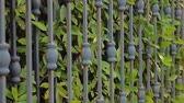 privado : Security and safety of private house, territory background. Closing gates with green leaves of hedge growing close to forged gates. Side view. Close-up. Automated gate. Green fence background Stock Footage