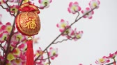 ameixa : Traditional Chinese new year decor with character Fu which means Blessing  Good Luck hanging on blossom tree. Wind is blowing. Stock Footage