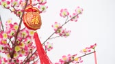 próspero : Traditional Chinese new year decor with character Fu which means Blessing  Good Luck hanging on blossom tree. Vídeos