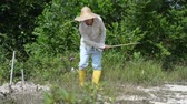 reaping : Asian worker cleaning farmland. Stock Footage