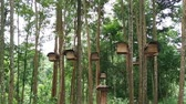 Bee hives in the tropical forest footage video. 動画素材