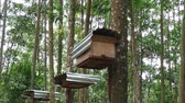 méhkas : Bee hives in the tropical forest footage video. Stock mozgókép