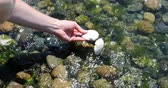 okyanus : Cleaning clam shell in ocean