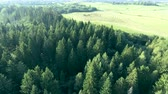 aura : flying above green forest at summer Stock Footage
