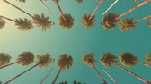 Driving under palm trees at a resort. Slow motion. Retro style.