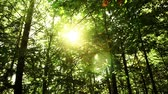 forest : Sun in the forest and a real lens flare