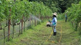plant fertilizer : Spraying fertilizer in a vineyard