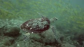 aquarium : sea turtle underwater Stock Footage