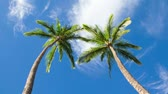 perfeição : Palm Trees and Clouds Time Lapse  Stock Footage