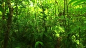 caminhada : Steadicam Shot Thu Lush Forest (Slow Motion) Stock Footage