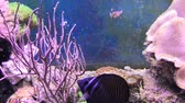 tentáculo : Fishes and plants Reef tank filled with water for keeping live underwater animals.