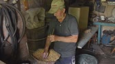 com casca : Elderly man grinds corn. Pensioner prepares food for domestic animals, birds. Agriculture