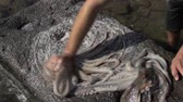 kalamar : Octopus being rubbed and slapped across rocks to remove impurities and to tenderize it